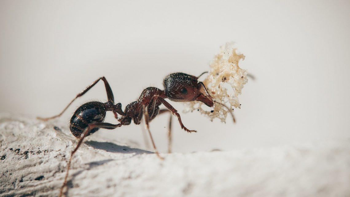 De mieren op afstand houden